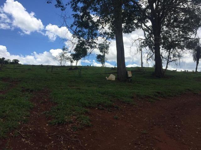 Fazenda com 5,5 Alqueires, Toda Formada, Pontalina Goiás, - Foto 7
