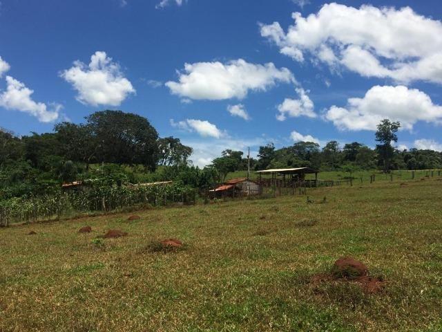 Fazenda com 5,5 Alqueires, Toda Formada, Pontalina Goiás, - Foto 11