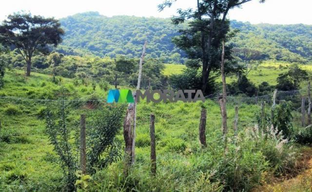 FAZENDA - 334 hectares - PARÁ DE MINAS (MG) - Foto 10