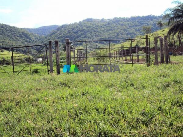 FAZENDA - 334 hectares - PARÁ DE MINAS (MG) - Foto 9