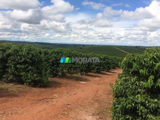 FAZENDA CAFÉ - 176,66 hectares - REGIÃO MACHADO (MG) - Foto 3