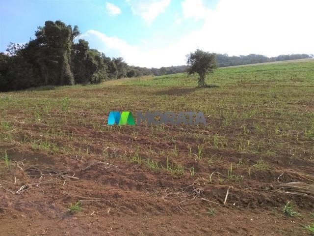 FAZENDA - 213 hectares - ONÇA DO PITANGUI (MG) - Foto 2