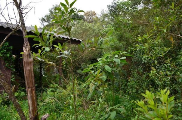 Terreno à venda, 1049 m² por R$ 450.000,00 - Villágio - Gramado/RS - Foto 12