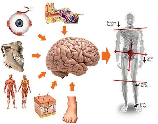 Fisioterapia Domiciliar: Ajudo pessoas na melhora da dor nos ombros  - Foto 5
