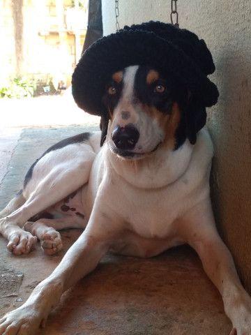 Cachorro americano puro - Foto 2