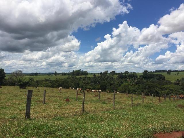 Fazenda com 5,5 Alqueires, Toda Formada, Pontalina Goiás, - Foto 17