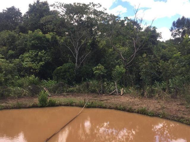 Fazenda com 5,5 Alqueires, Toda Formada, Pontalina Goiás, - Foto 19