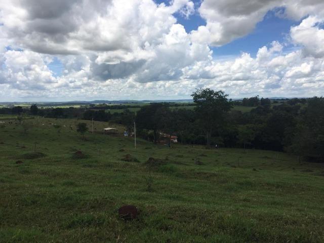 Fazenda com 5,5 Alqueires, Toda Formada, Pontalina Goiás, - Foto 20