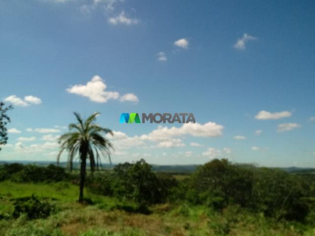 FAZENDA A VENDA - 143 hectares - BOM DESPACHO (MG) - Foto 8