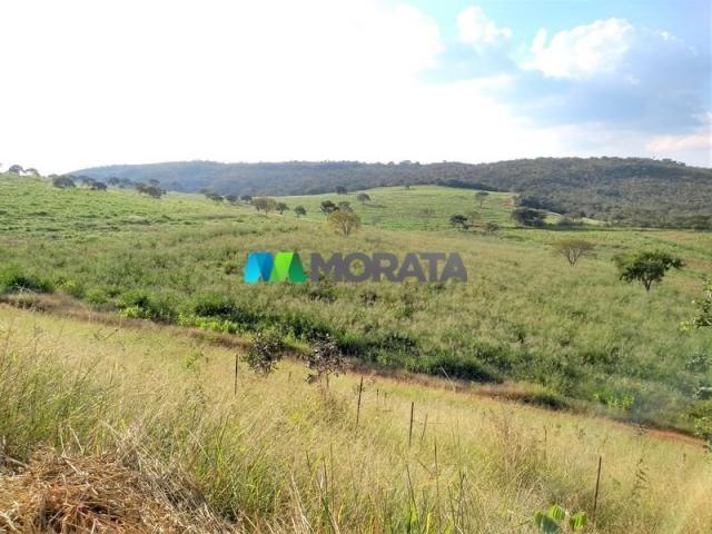 FAZENDA - 213 hectares - ONÇA DO PITANGUI (MG) - Foto 18