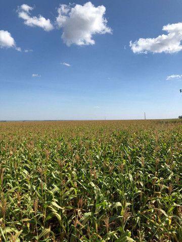 Fazenda Extra 33,5 Alqueires   30 na lavoura   Oport. Única  - Foto 2