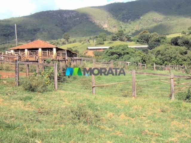 FAZENDA - 334 hectares - PARÁ DE MINAS (MG) - Foto 4