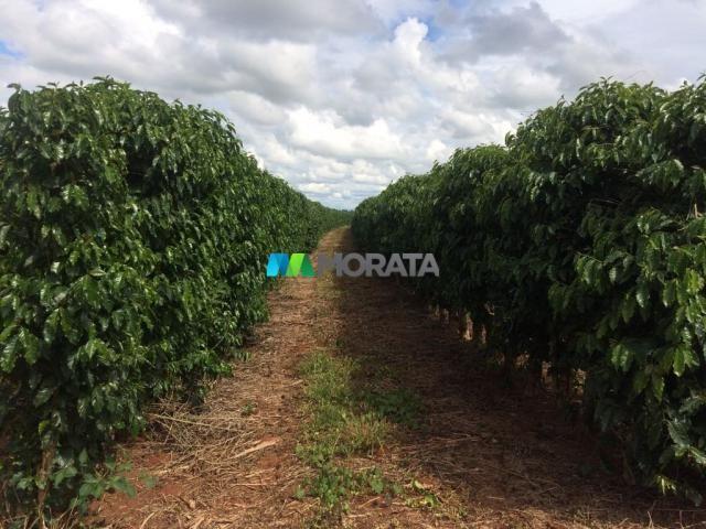 FAZENDA CAFÉ - 176,66 hectares - REGIÃO MACHADO (MG) - Foto 7