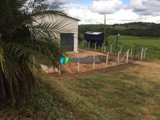FAZENDA CAFÉ - 176,66 hectares - REGIÃO MACHADO (MG) - Foto 14