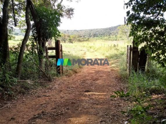 FAZENDA - 213 hectares - ONÇA DO PITANGUI (MG) - Foto 14