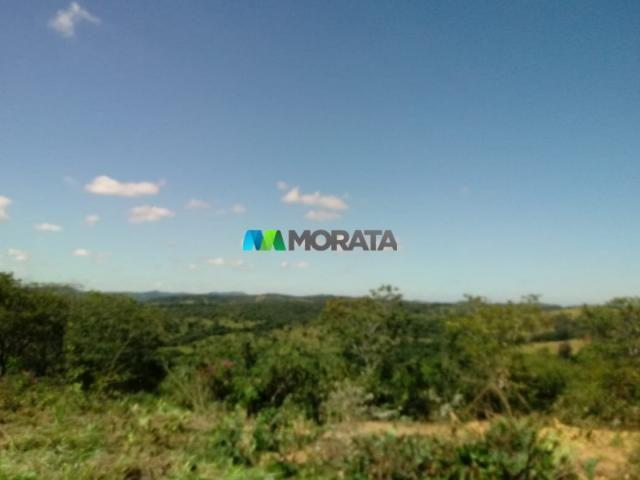 FAZENDA A VENDA - 143 hectares - BOM DESPACHO (MG) - Foto 5