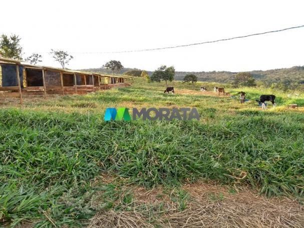 FAZENDA - 213 hectares - ONÇA DO PITANGUI (MG) - Foto 10