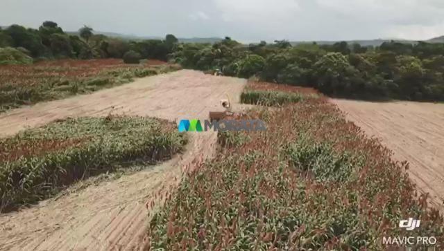 FAZENDA A VENDA - 86 hectares - REGIÃO SETE LAGOAS (MG) - Foto 3