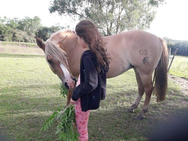 Égua crioula  - Foto 5