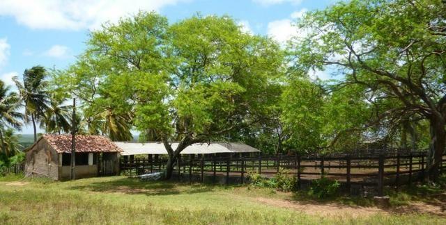 Vendo Fazenda em Ceará Mirim - Foto 5
