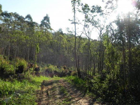 Agt-ótimo terreno para construir chacará na região de Mairiporã - Foto 19