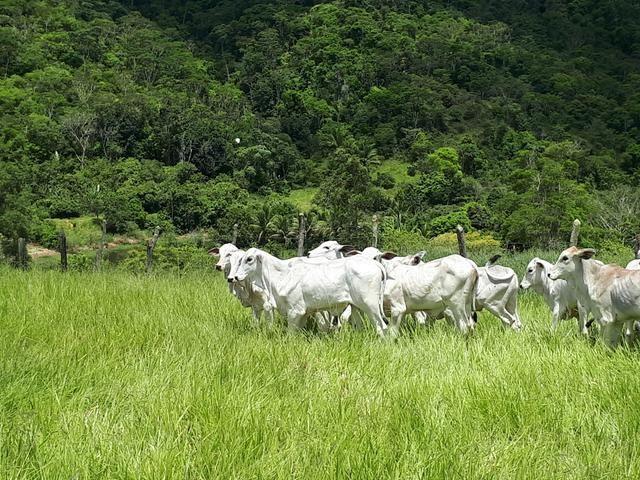 Venda ou arrendamento Excelente Fazenda 540 tarefas em Ubaira - Foto 5