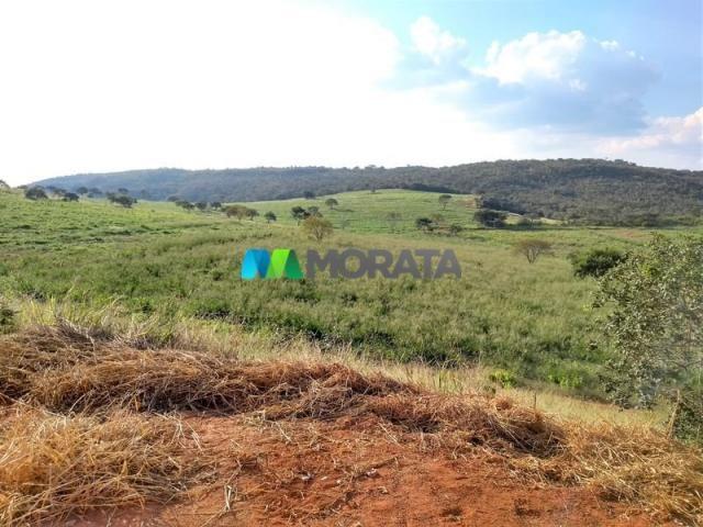 FAZENDA - 213 hectares - ONÇA DO PITANGUI (MG) - Foto 19