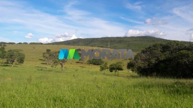 FAZENDA À VENDA - 150 HECTARES - PITANGUI (MG) - Foto 2