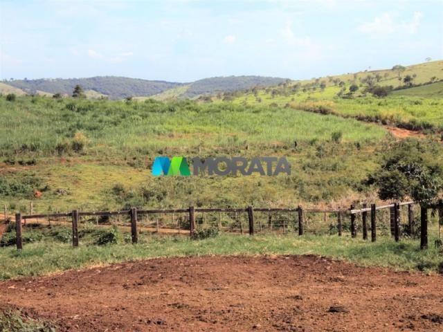 FAZENDA - 334 hectares - PARÁ DE MINAS (MG) - Foto 18