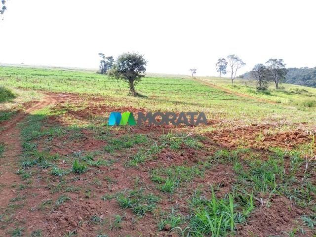 FAZENDA - 213 hectares - ONÇA DO PITANGUI (MG) - Foto 13