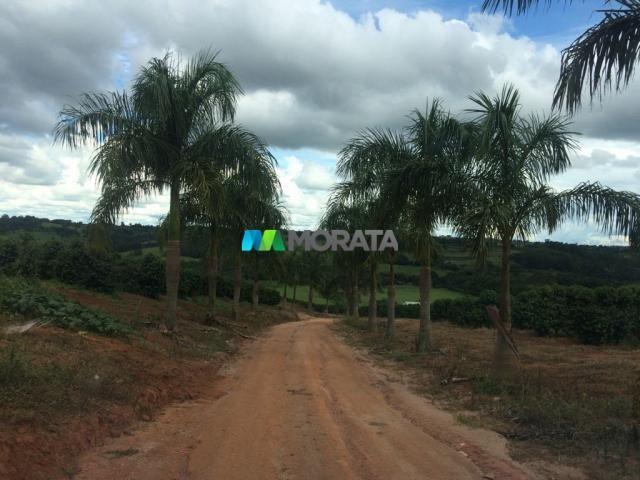 FAZENDA CAFÉ - 176,66 hectares - REGIÃO MACHADO (MG) - Foto 18