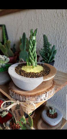 Cactos Naturais com jarro de concreto  - Foto 2