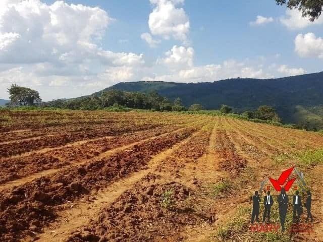 Fazenda em poços de caldas 62 hectares 4.000.000.00 - Foto 3