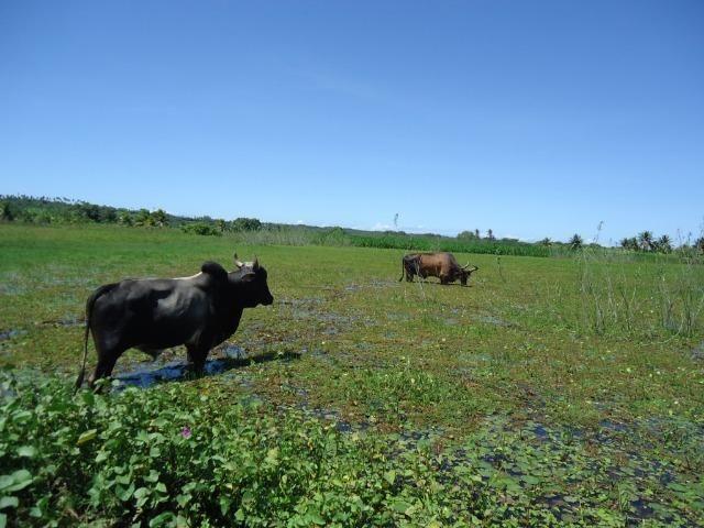 Vendo Fazenda em Ceará Mirim - Foto 14