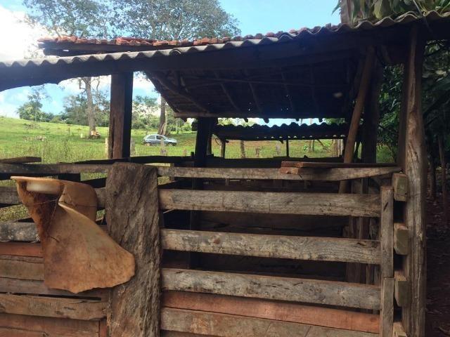 Fazenda com 5,5 Alqueires, Toda Formada, Pontalina Goiás, - Foto 8
