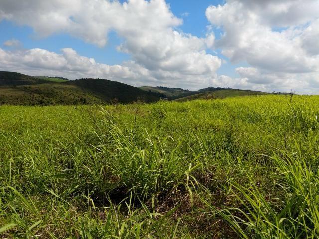 Fazenda com 180 Hectares a 8 km da Pista de Cortês-PE - Foto 3