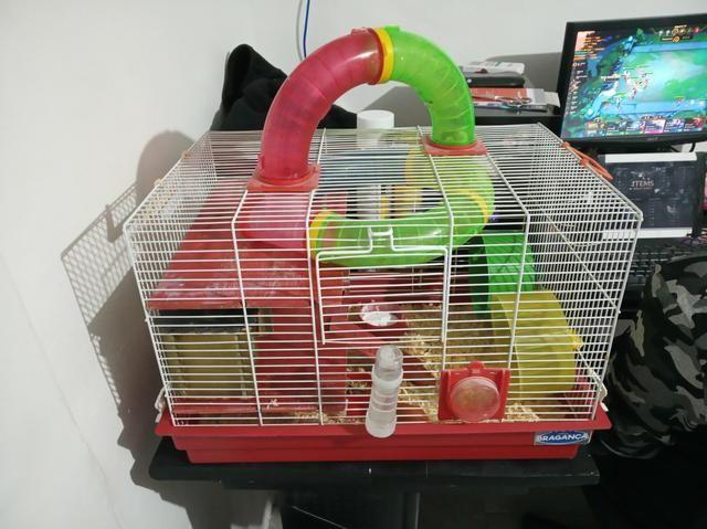 Hamster com duas gaiolas