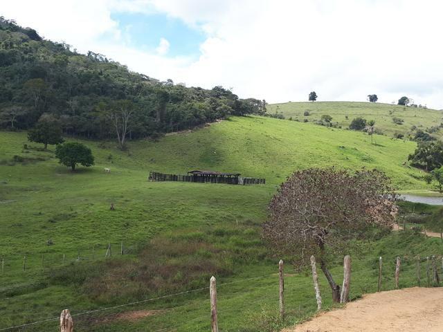 Venda ou arrendamento Excelente Fazenda 540 tarefas em Ubaira - Foto 3