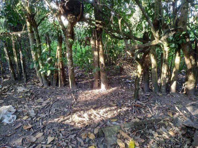 Sítio na Vila Temão - Jitaúna - Foto 19