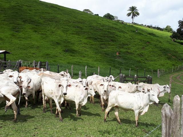 Venda ou arrendamento Excelente Fazenda 540 tarefas em Ubaira - Foto 10