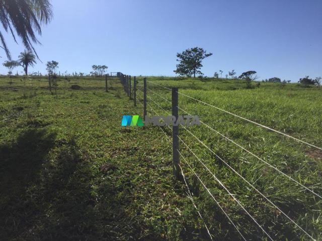 FAZENDA A VENDA - 86 hectares - REGIÃO SETE LAGOAS (MG) - Foto 14