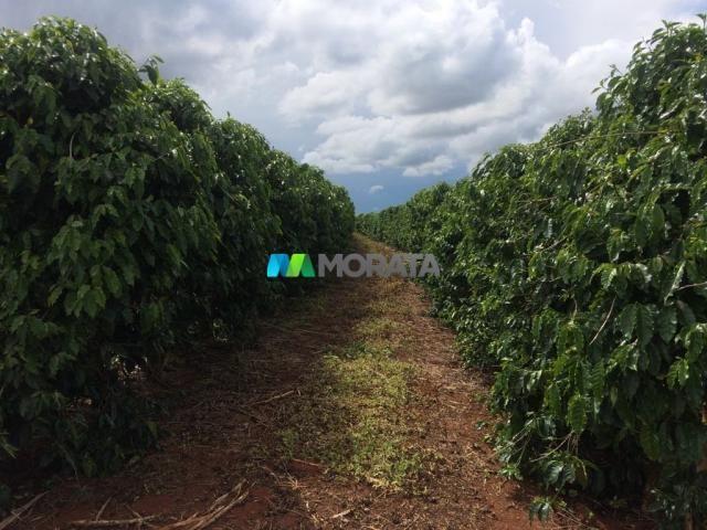 FAZENDA CAFÉ - 176,66 hectares - REGIÃO MACHADO (MG) - Foto 8