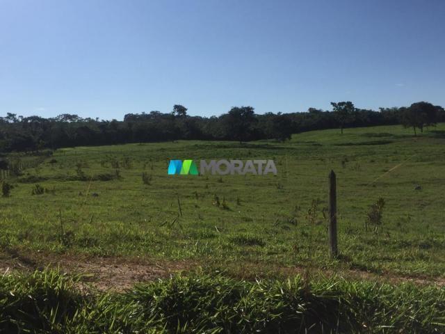 FAZENDA A VENDA - 86 hectares - REGIÃO SETE LAGOAS (MG) - Foto 12