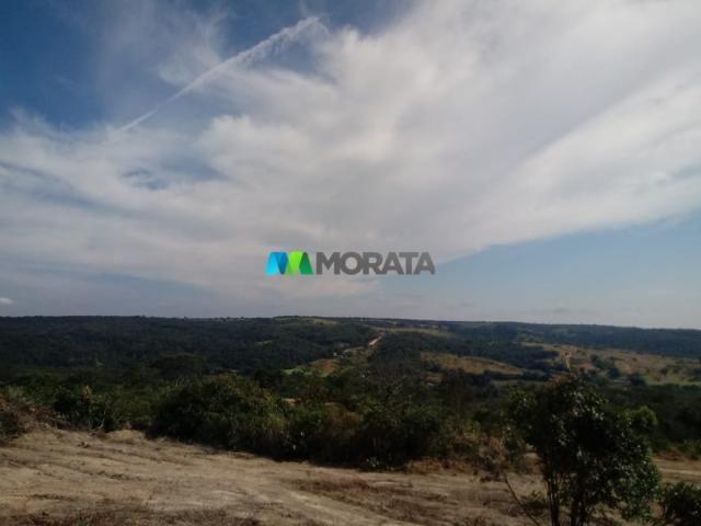 FAZENDA A VENDA - 143 hectares - BOM DESPACHO (MG) - Foto 4