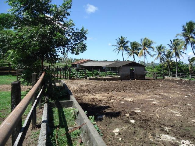 Vendo Fazenda em Ceará Mirim - Foto 10
