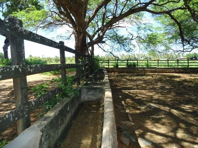 Vendo Fazenda em Ceará Mirim - Foto 6