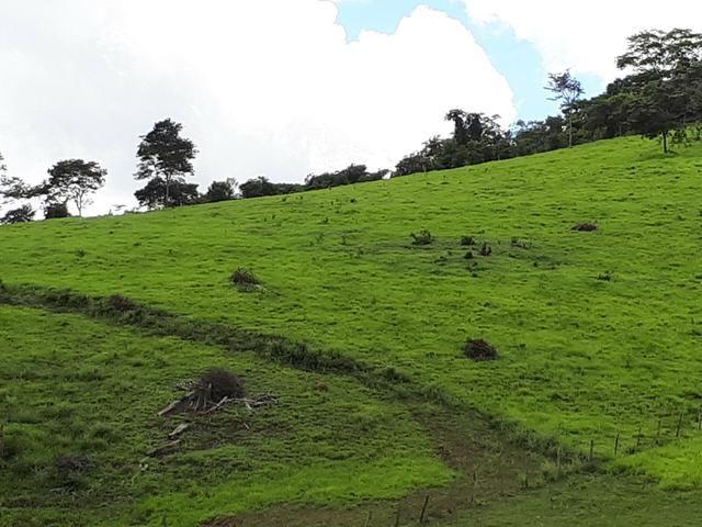 Venda ou arrendamento Excelente Fazenda 540 tarefas em Ubaira - Foto 11