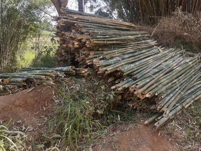 Vendo bambu para todos tipos de trabalho bambu cana de india e bambu comum - Foto 6