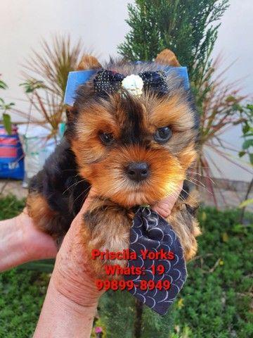 Yorkshire Terrier fêmeas e machos baby face! - Foto 6