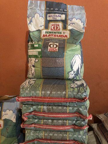 Sementes Massai - MATSUDA  10kg